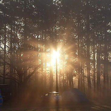 Picture of the sun rise at Rendlesham Forest, as the sun shone between the pine trees, one of the five frugal things we did last week