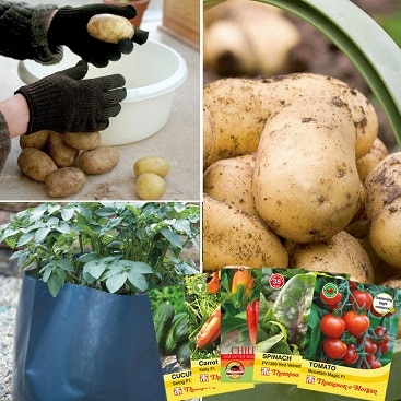 Picture of stuff in special offer potato growing kit with extra free seeds.