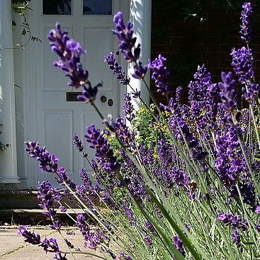 Picture of lavender by our front door, to illustrate a post on what is a pension and why you should care