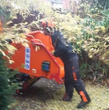 Picture of a tree surgeon feeding branches through an orange wood chipper