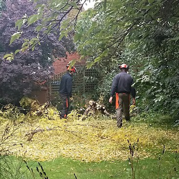 Picture of two tree surgeons with all the fallen leaves and logs