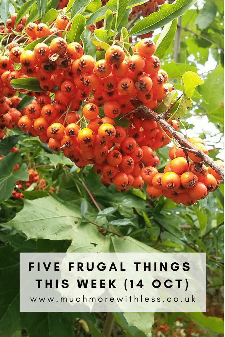 Pinterest size image of orange berries with label Five frugal things this week (14 Oct)