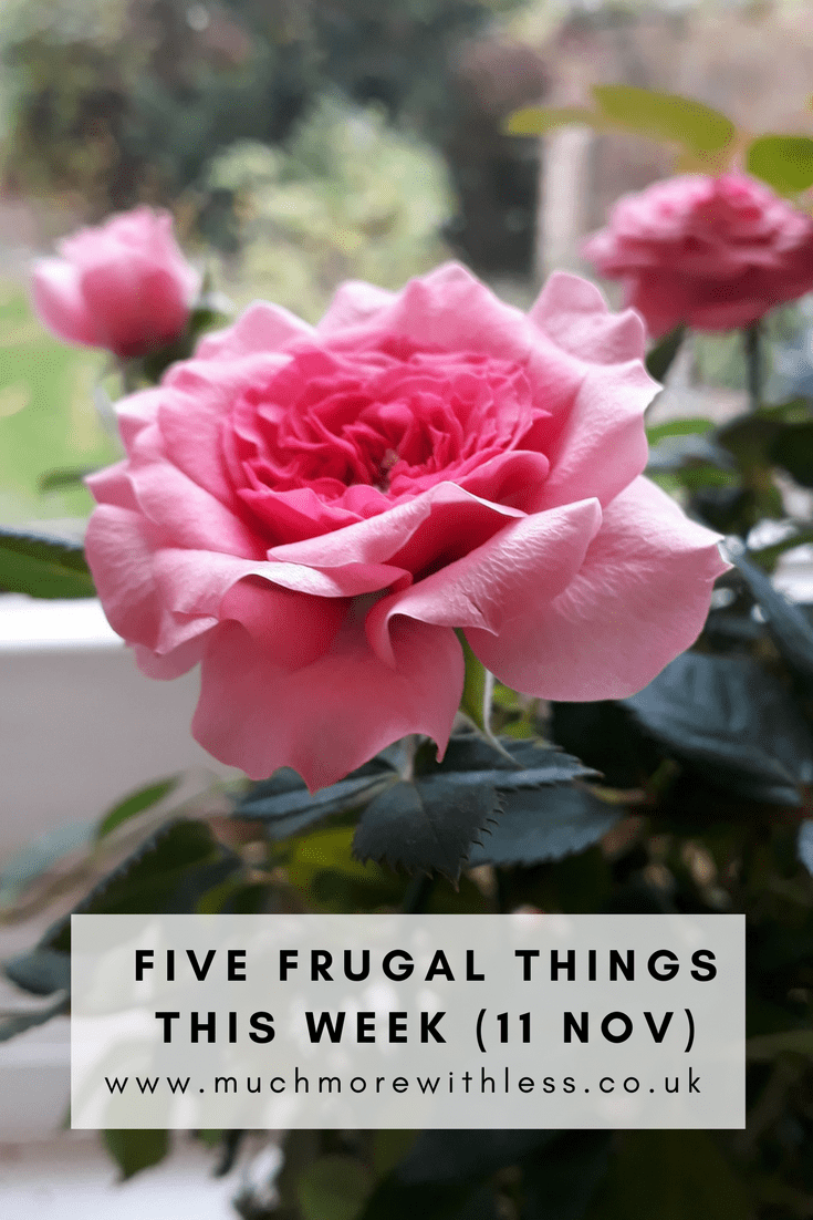 Pinterest size image of miniature rose on my kitchen windowsill for five frugal things this week