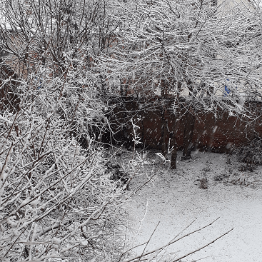 Picture of the hornbeam hedges in our garden covered in snow last Sunday to illustrate my 5 frugal things post
