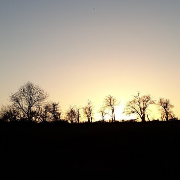 Picture of trees silhouetted against a skyline with the sun rising behind them