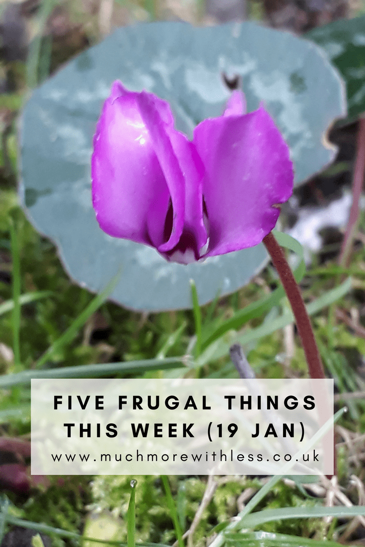Pinterest size image of a cyclamen for my five frugal things this week post