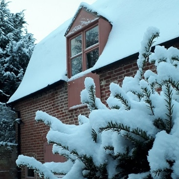 Picture of lots of snow on the yew hedge by the Gig House