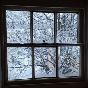 Picture of a sash window with view of tree in the snow outside