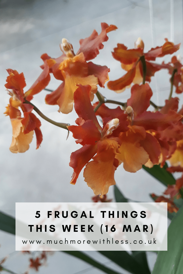 Pinterest size image of orange orchids for my 5 frugal things this week post