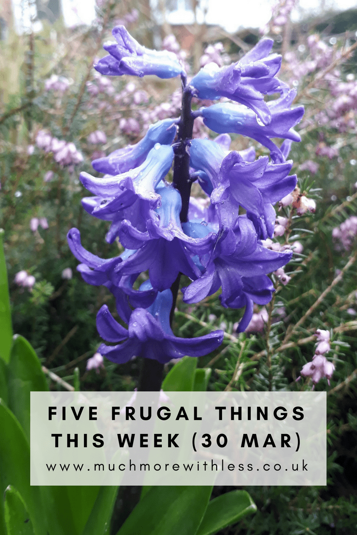 Pinterest sized picture of bluebells in our garden for this five frugal things post