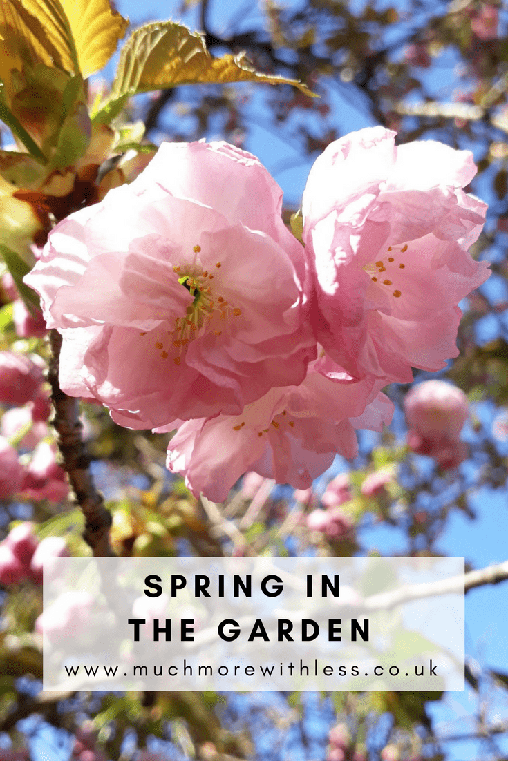 Pinterest size image of cherry blossom and blue skies for my post on spring in the garden
