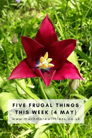 Pinterest size photo of a red tulip for my five frugal things post