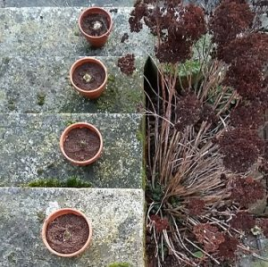 Bulbs in pots on stone steps to illustrate my post about compound interest
