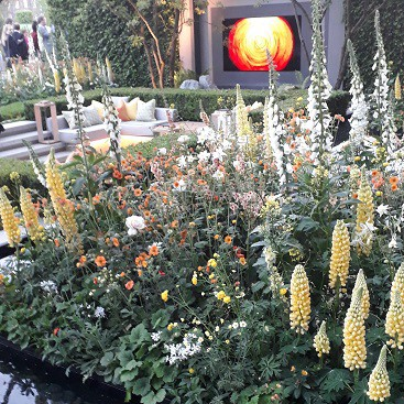 Picture of the LG show garden at Chelsea Flower Show