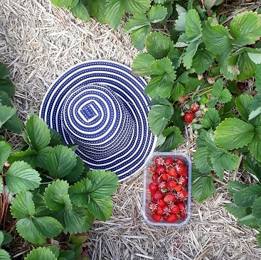Picture of my hat and a punnet of strawberries at the pick your own farm for my post on how not to make strawberry jam