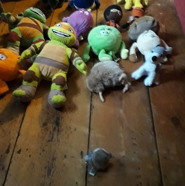 Picture of the auction with soft toy bidders for my five frugal things on holiday post
