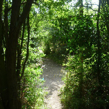Picture of green trees and bushes on my running route along the Railway Walk for my September resolutions post