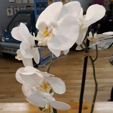 Picture of a white orchid when I went to the SHOMO money bloggers conference and awards