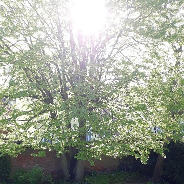 Picture of sunlight through a tree for my post on ethical investing