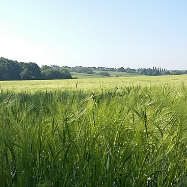 Picture of crops in a field for my post on ethical investing
