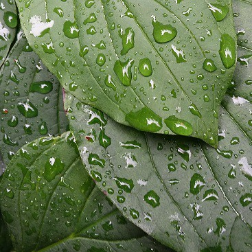Picture of green leaves with raindrops for my post on ethical investing