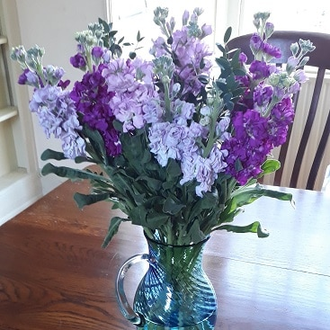 Purple flowers in a vase from Bloom & Wild