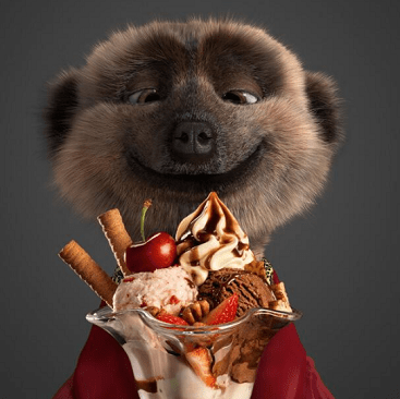 Picture of a meerkat from the Compare the Market ad campaign