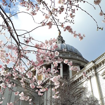 Picture of pink blossom in front of St Paul's cathedral for my post on 5 frivolous frugal things