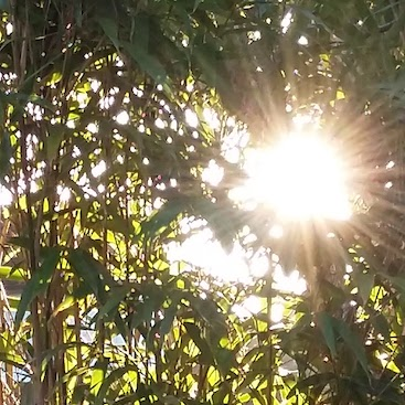 Picture of sunlight through bamboo for my post on switching electricity supplier