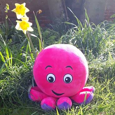 Picture of a pink soft toy octopus for my post on switching electricity supplier