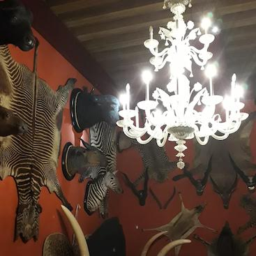 Picture of a glass chandelier in the Natural History Museum, with animal skins on the walls