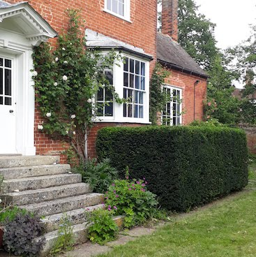 Picture of the yew hedge by our back door after I cut it