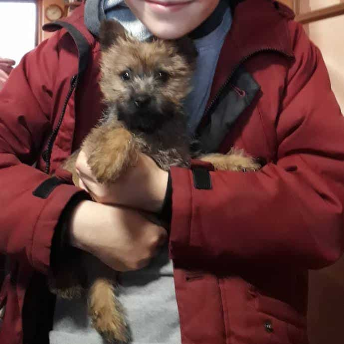 Picture of my son holding Otto, the cairn terrier puppy