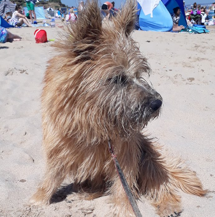 Picture of Otto the dog on the beach at Fraisthrope during our coronavirus staycation