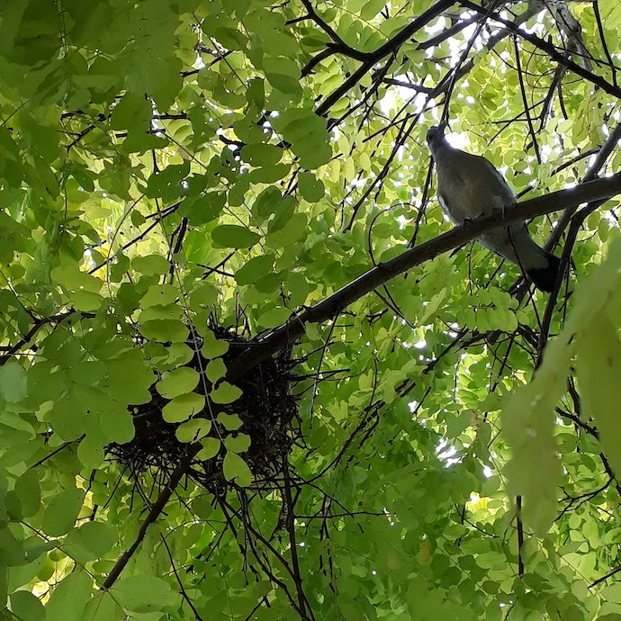Picture of a bird and a nest in a tree