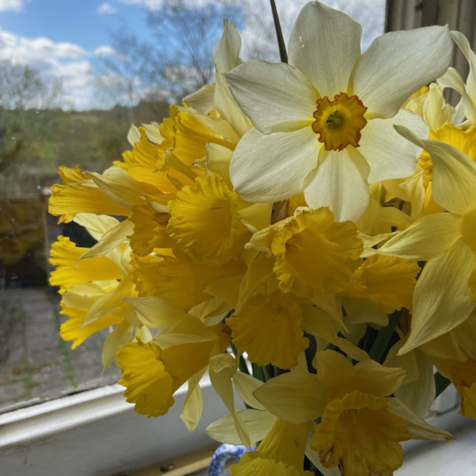 Bunch of daffodils in the sunshine